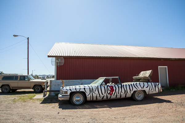 zebra_car_texas-1