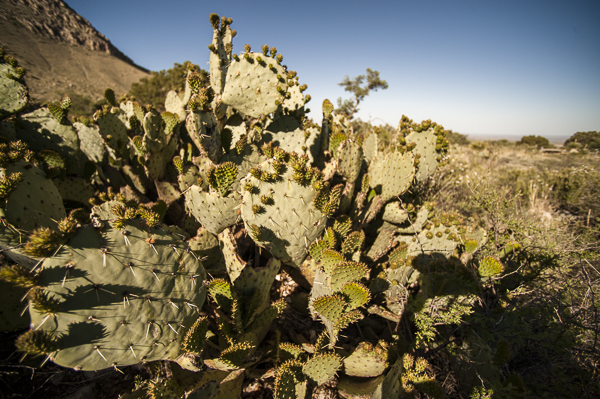 guadalupe_mountains-2