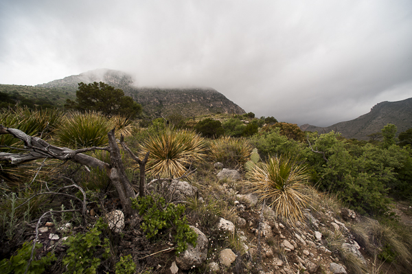 guadalupe_mountains-3