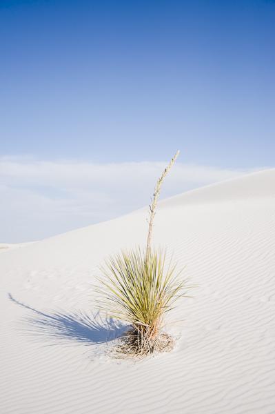 white_sands-8