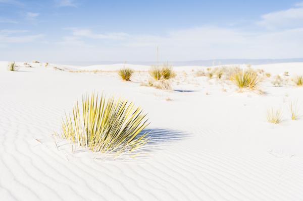 white_sands-9