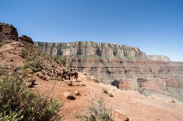 grand_canyon-11