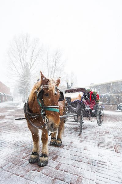 horse-aspen-snow