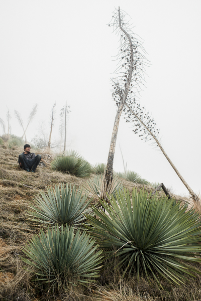 yucca_field_big_sur-5