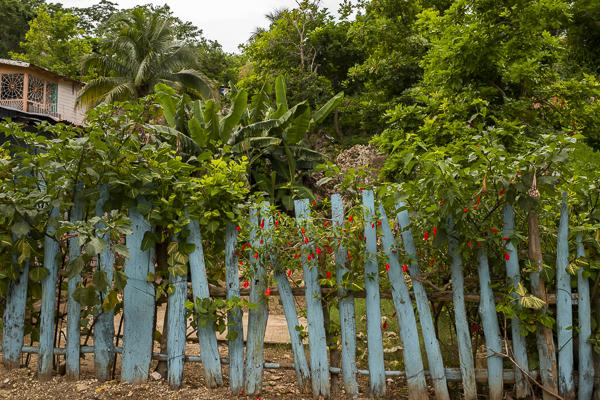 jamaica-6959