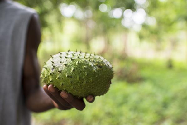 jamaica-6981