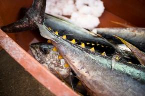 fish market de la cruz